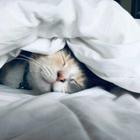 cat lying under a blanket - greiner title picture